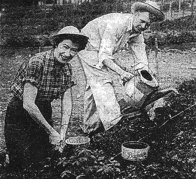 Naval cryptographer Lt. Cmdr. Milton Gaschk, and his wife Julia, of 3941 Langley Court, McLean Gardens, started gardening at 42nd Street in 1948. (Washington Post and Times Herald, May 14, 1956)